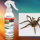 Как избавиться от пауков в доме? Действенные способы борьбы с членистоногими